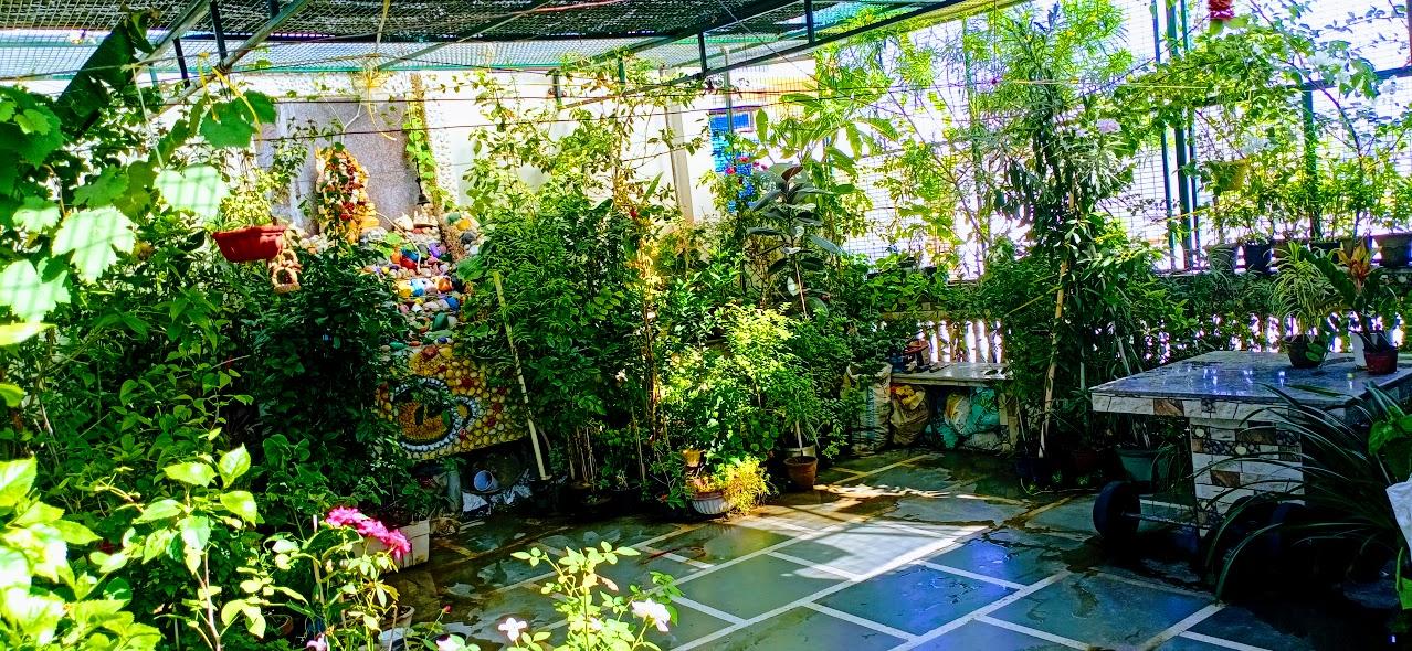 corona v\s domestic herbs
